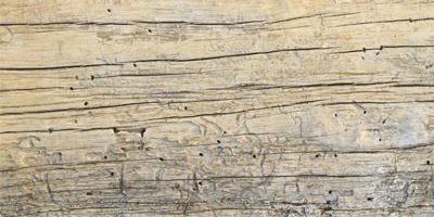 Termites or Carpenter Ants