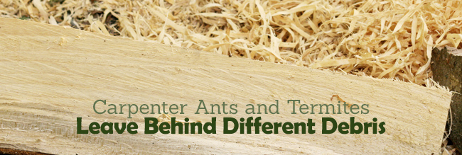 Termites or carpenter ants what to look out for steve